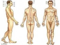 World Health Organization Report: Diseases / Disorders That Can Be Treated by Acupuncture